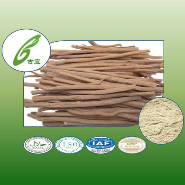factory hot sale 100% Natural Huai Niu Xi extract or Achyranthes Root Extract Powder radix achyranthis bidentatae ext