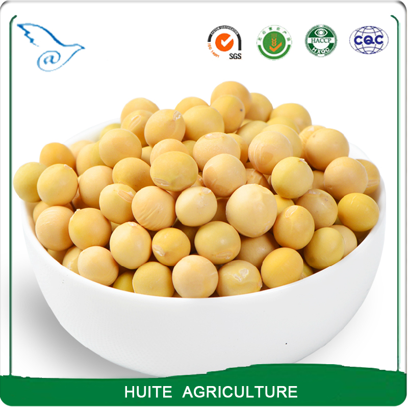 Raw soybeans with best price/price fob/price cif