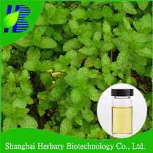 2018 Hot product natural peppermint oil bulk