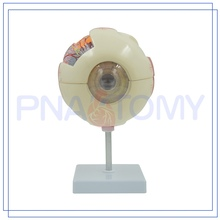 PNT-0660 high quality Human Eyes Anatomy Model Customized