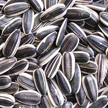 Sunflower Seeds - High Quality Grade A