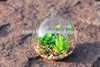 Modern Hanging Glass Teardrop&Globe Terrarium Perfect for Air Succulent Plant For Garden Home Wedding Party Decoration