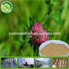 100% pure natural GMP factory Red Clover Extract with free sample