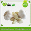 wholesale garlic in China