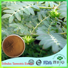 High purity raw material Tribulus terrestris extract,natural tribulus terrestris extract,organic tribulus terrestris powder
