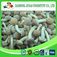 Whole shape fresh frozen IQF lingzhi mushroom