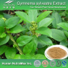 Gymnema Sylvestre Extract, Gymnema Sylvestre Extract Powder Gymnemic Acids