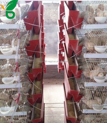 Commercial laying cage for quail automated with drinkers and feeders