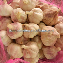 fresh red normal white garlic
