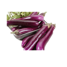 Purple Eggplant Seeds For Growing - High Yield SXE No.4