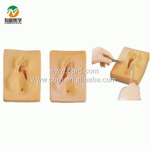 BIX-F3B vulva suture training model