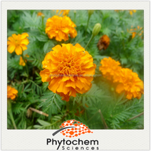 Marigold Extract 5% Lutein Ester Powder with stability for eye protection