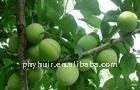 manufacture direct supply Greengage Green Plum Juice.(P)