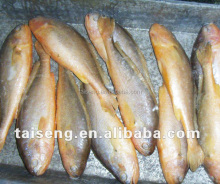 fresh seafood frrozen yellow croaker fish