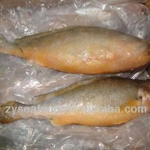 1000+ For Sale Frozen Yellow Croaker