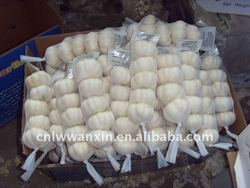 Chinesse fresh pure garlic price