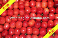Exporting 2014 fresh delicious red cherries wholesale price