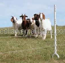 Horse control farm electric fence energiser/energizer charger controller with electrified wire fence to protect animals