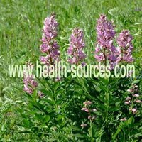 Black Cohosh Extract 8% Triterpene glycosides
