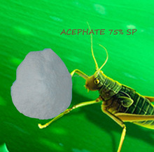 Highest Quality ! ACEPHATE 75 SP INSECTICIDE ACEPHATE