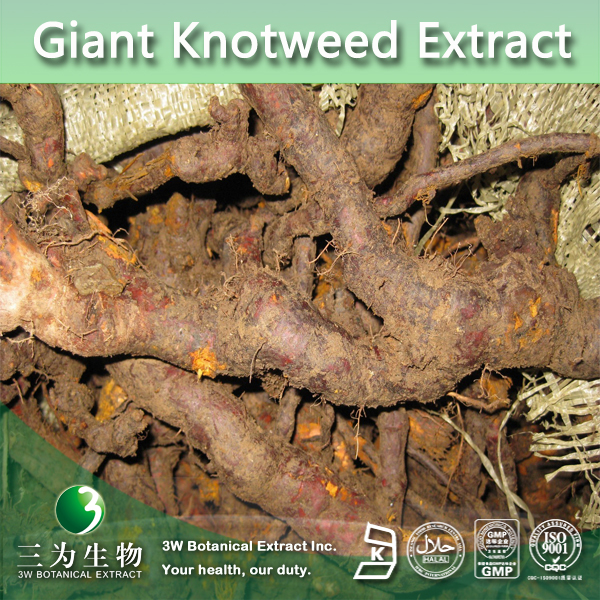 giant knotweed extract 50%, 98%, 99% Resveratrol,Acetyl-resveratrol Factory,Acetyl-resveratrol 98%