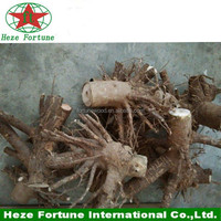 Stamp paulownia 9501 root stump from China
