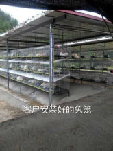 galvanized welded steel wire mesh rabbit cages