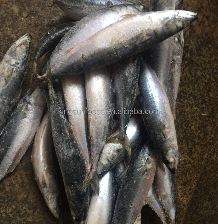 Whole Round fish frozen pacific mackerel fish
