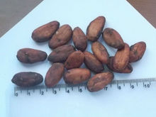 Cacao Beans/Seeds high quality and low price Cameroon
