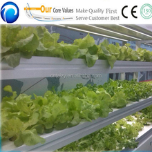 vegatable cultivation/soilless agriculture/hydroponic systems for sale