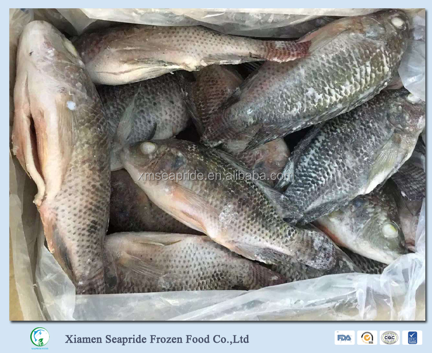 Frozen Tilapia Gutted Scaled Whole Round