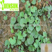 Natural Gotu Kola Extract Powder / Asiaticoside (90%-95%)