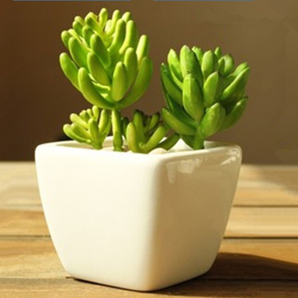 3 inches squared mini pot plant