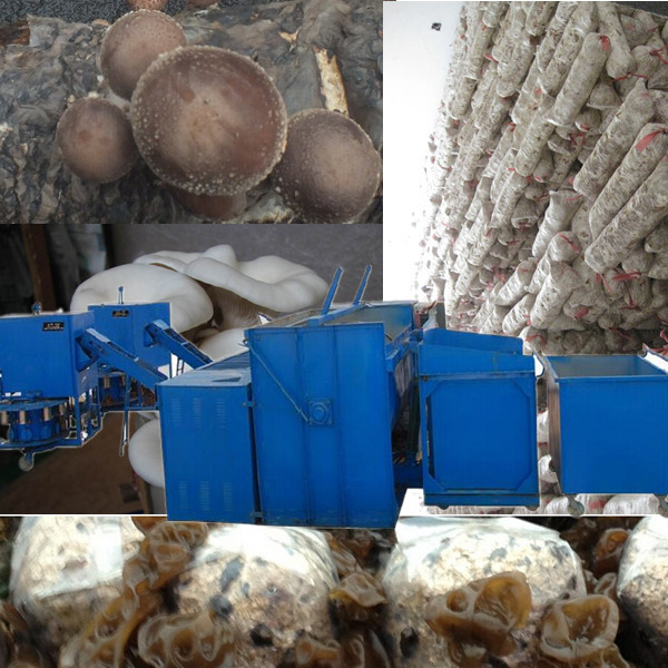 Factory price lentinus edodes making machine/Mushroom bagging machine