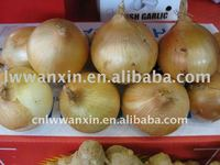 fresh red onion from China