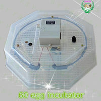 60 eggs hatcher JN2-60 egg incubator made in China used chicken egg incubator for sale
