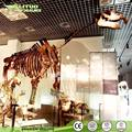 Life Size Artificial Animal Skeleton Model