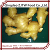 Europe Buyer Of Dry Ginger, Ginger Export To USA Market
