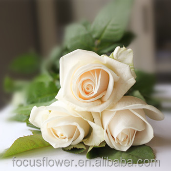 clean florist supplies white flower types vendela rose for decoration