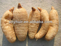 Gastrodin Gastrodia Tuber Extract