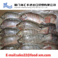fishing bait small size tilapia