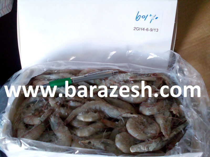 Farmed Persian Gulf Shrimps