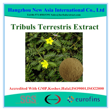 Pure Saponins 40%-90% UV Tribulus Terrestris Extract With Kosher Halal ISO22000 Certificate
