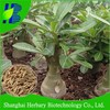 Wholesale Adenium Obesum seeds with low price and good quality