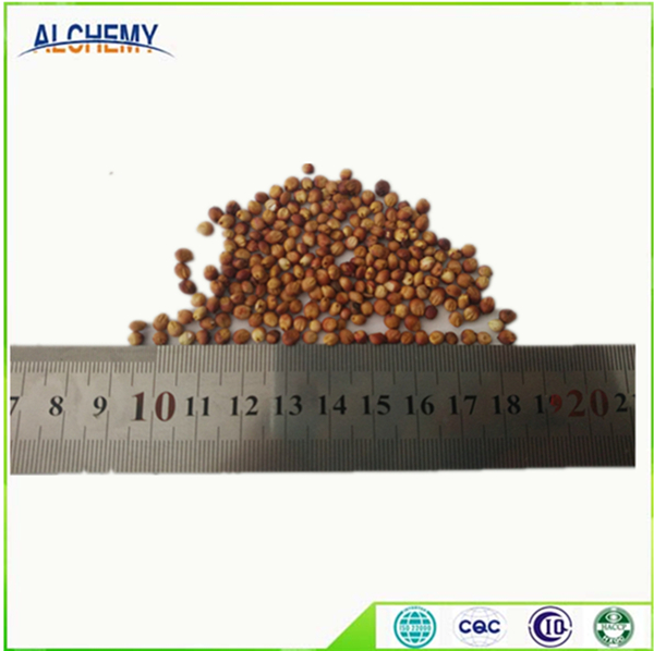 Red And White Sorghum For Sale / Sorghum Flour White / Sorghum Grains