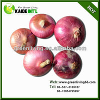China fresh all kinds of onions supplier