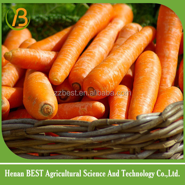 China carrot export/dried carrot
