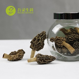 Cheap Price of Dried Black Morels Mushrooms for Sale with High Quality