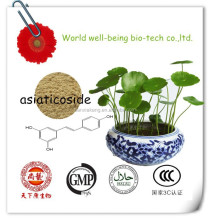 centella asiatica extract Powder Triterpenes 10%-80% Asiaticoside 10%-90% HPLC