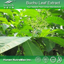 Factory supply Buchu leaf extract/Bioflavoniods 10%/Diosmin 10%/Cure diabetes plant extract